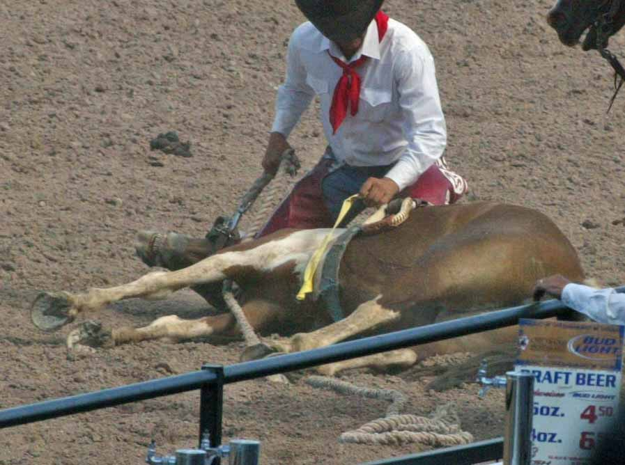 ... horse race rodeo people claim to love their victims but untold numbers